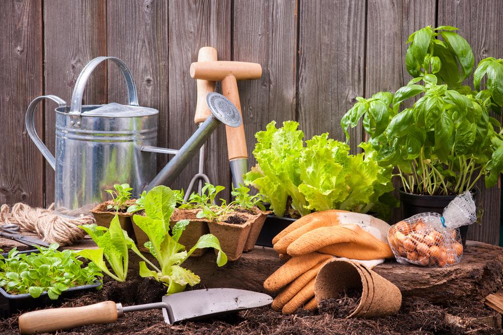 Comment choisir vos outils de jardinage ?